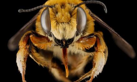 Que valent les abeilles dans notre patrimoine national ?